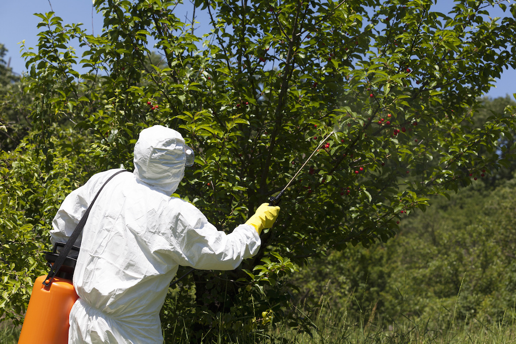 Spraying a fruit orchard