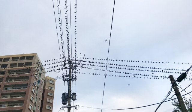 鳥害対策 長野